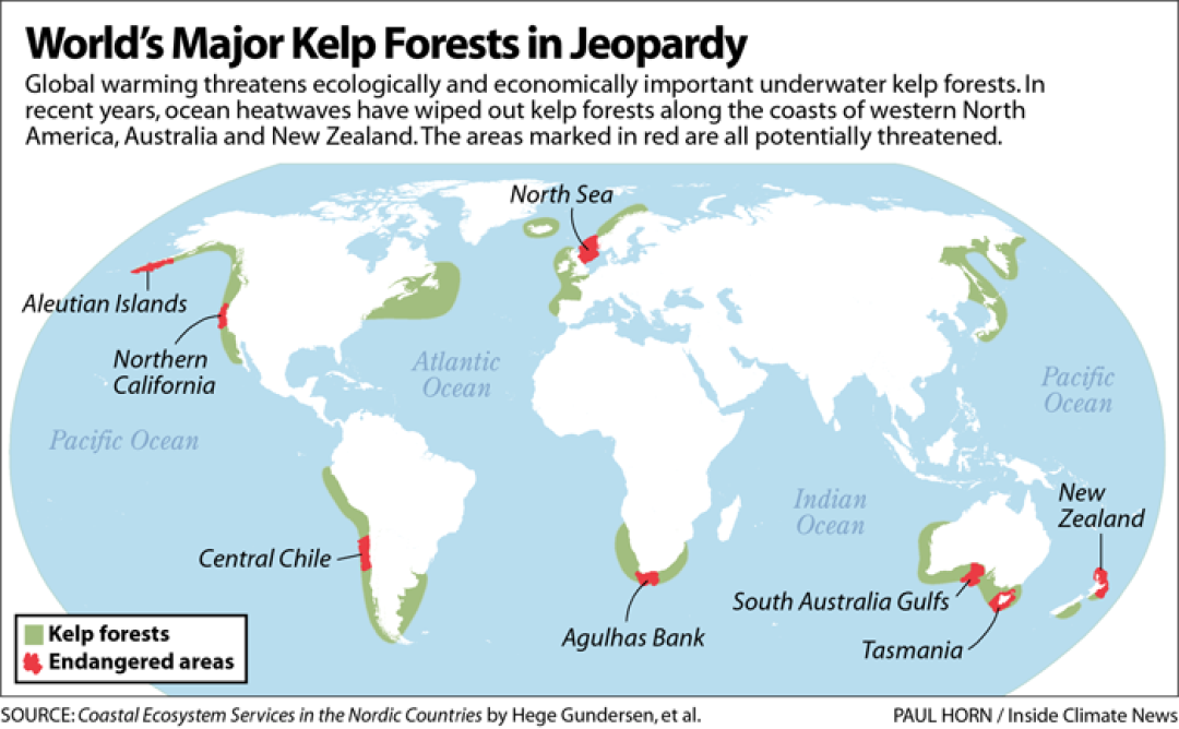 Kelp Forests map