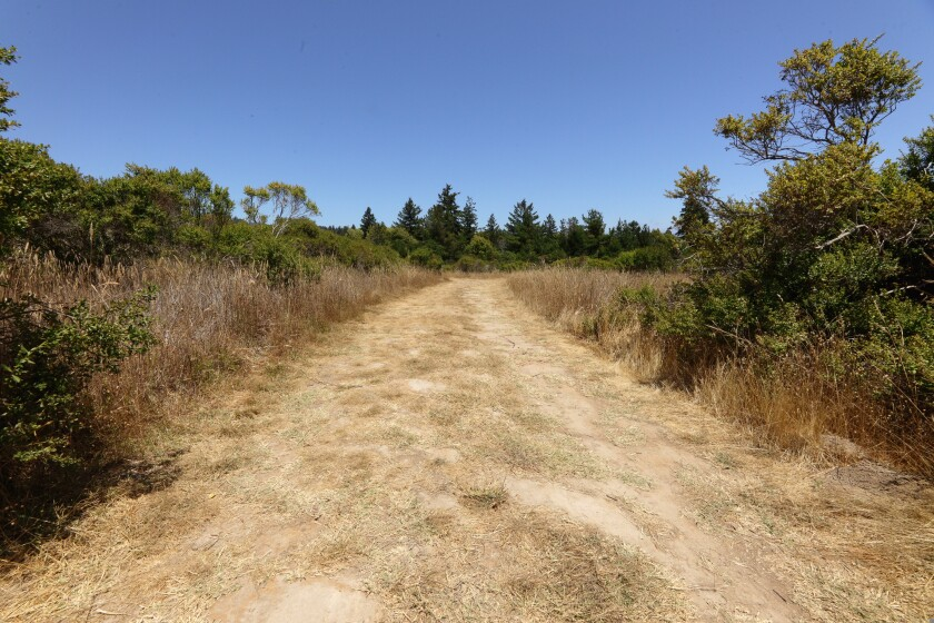 A photo taken on July 13, 2021 shows the extremely dry conditions near Pogonip in Santa Cruz County.