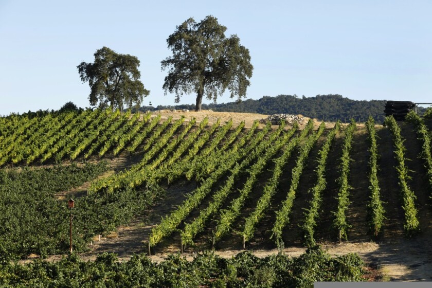 Tablas Creek Vineyard is growing grape varieties that require very little water.