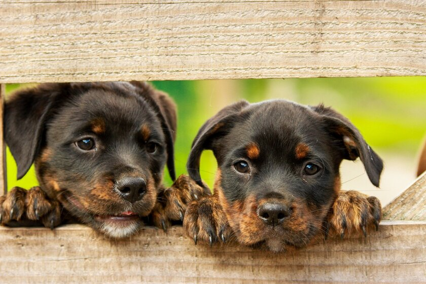 A file image of two puppies